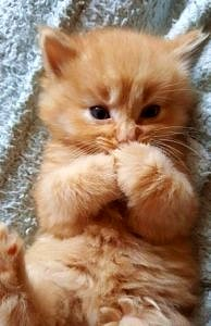 Wstydliwy kot