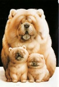 Rodzina piesków