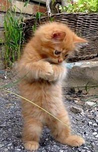 Stojący kot