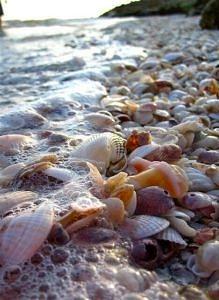 Plaża z muszlami, Wyspa Sanibel, Floryda