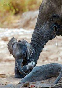 Słonik z mamą