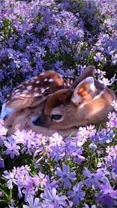 Sarenka w kwiatkach