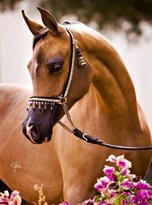 Koniś
