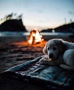 Piesek przy ognisku