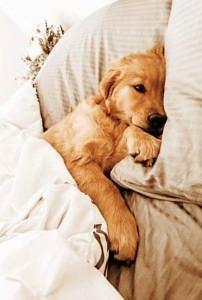 Piesek w łóżku