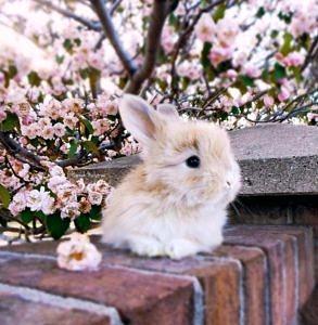 Słodki królik