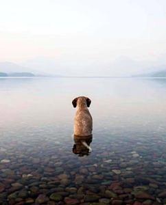 Jezioro McDonald w USA