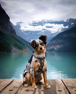 Jezioro Louise Kanada
