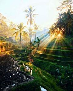 Tarasy ryżowe Bali Indonezja
