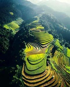 Pola ryżowe Wietnam