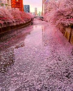 Megur Tokio