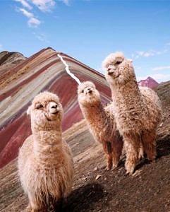 Tęczowe Góry Peru