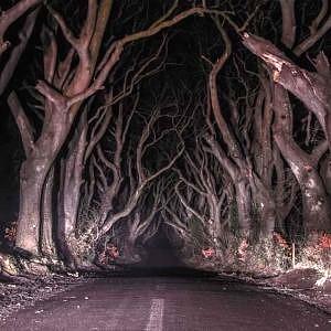 Dark Hedges – najmroczniejsza droga, Irlandia