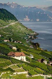 Winnica Szwajcaria