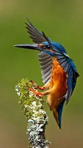 Kolorowy ptak